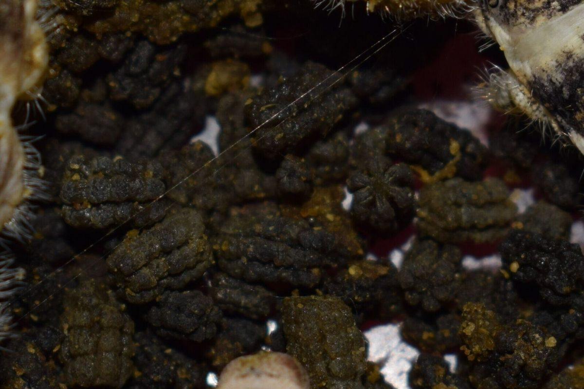 Silkworm frass
