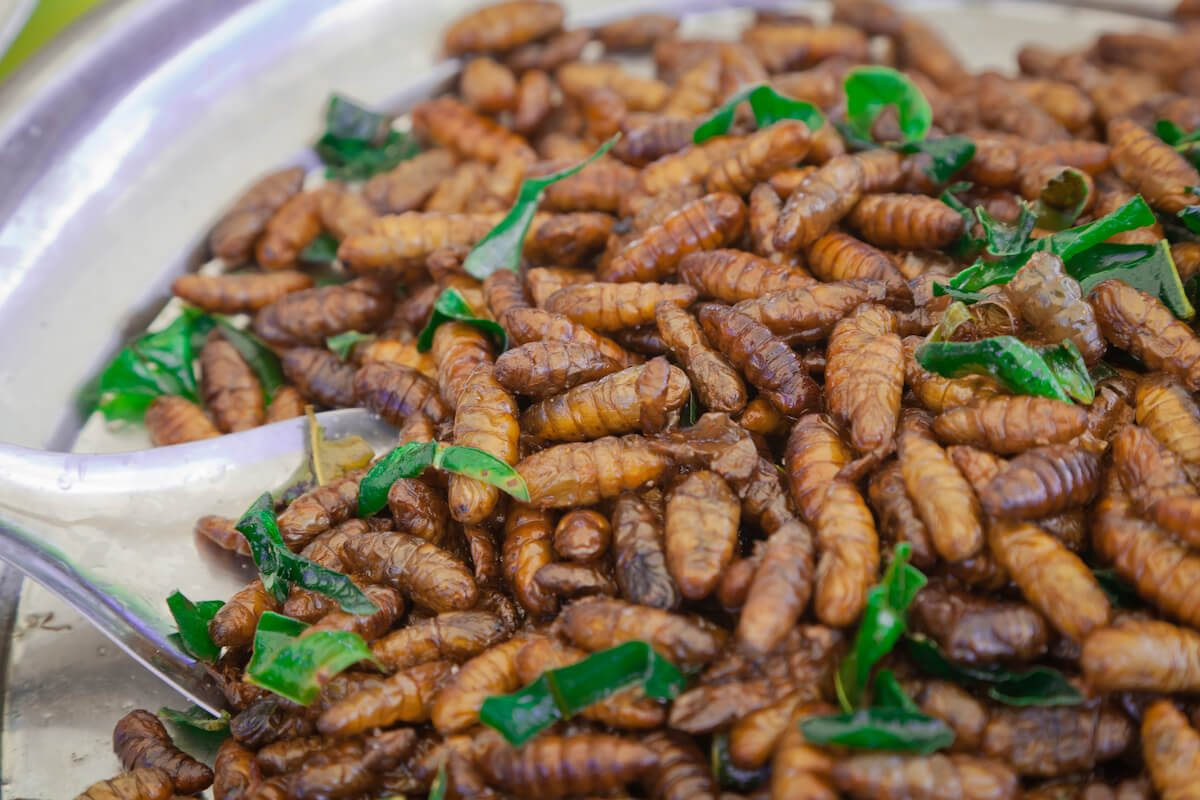"Korean silk worm dish, fried ""beondegi"""