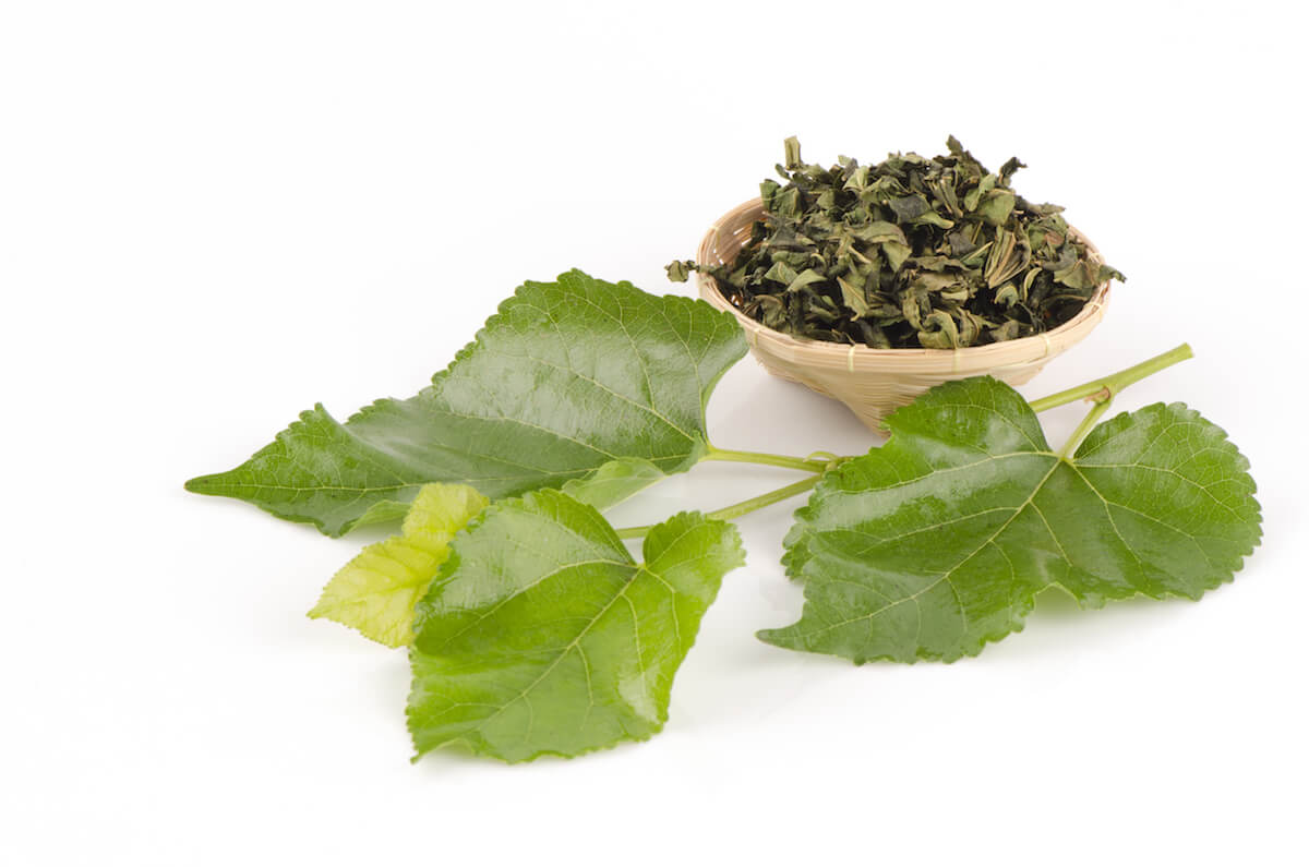 Dried mulberry tea leaves and fresh mulberry leaves