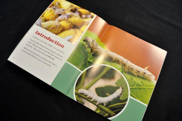 Silkworms - Textbook